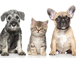 veterinaires